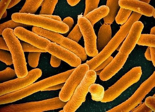 Can Probiotics Lower Blood Sugar?