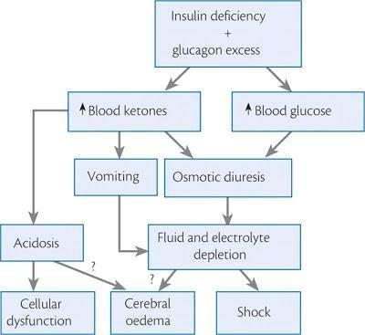 Pathophysiology Of Diabetic Ketoacidosis : Animation