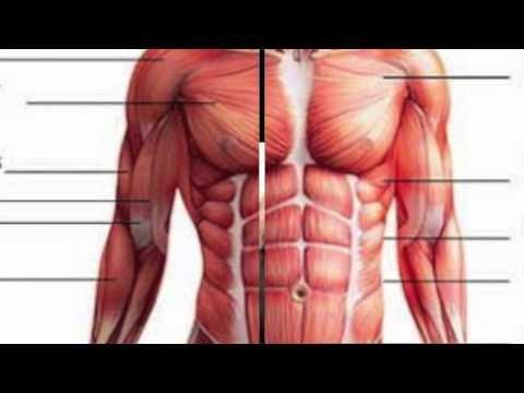 What Does Ketoacidosis Do To Your Body?