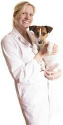 Dog Diabetes Symptoms Panting