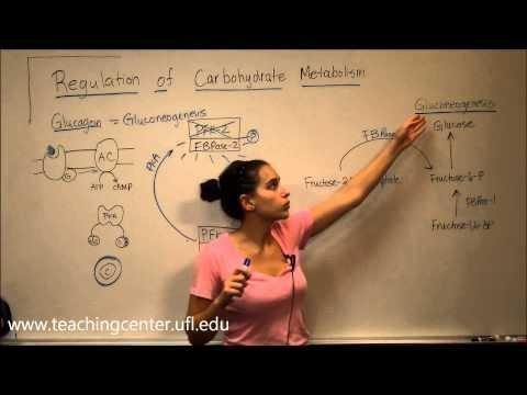 Insulin Has Which Effect On Carbohydrate Metabolism