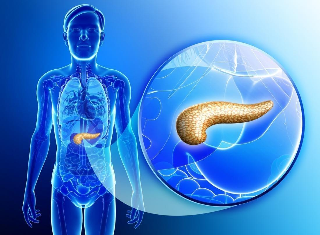 Pancreas: Functions And Possible Problems