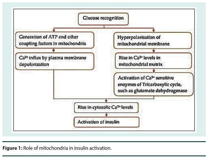 Cellular, Molecular And Therapeutic Advances In Type 2 Diabetes Mellitus