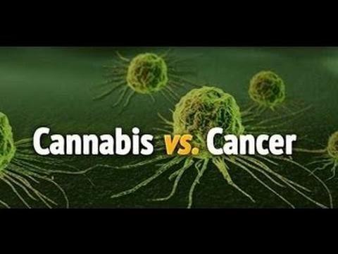 Cannabinoids And Diabetes
