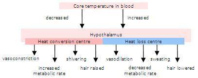 How Would A Problem With Insulin Receptors Affect Homeostasis