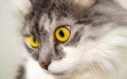 Kitten Has Low Blood Sugar