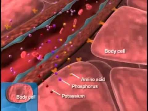 How Does The Urinary System Play A Role In Type 2 Diabetes