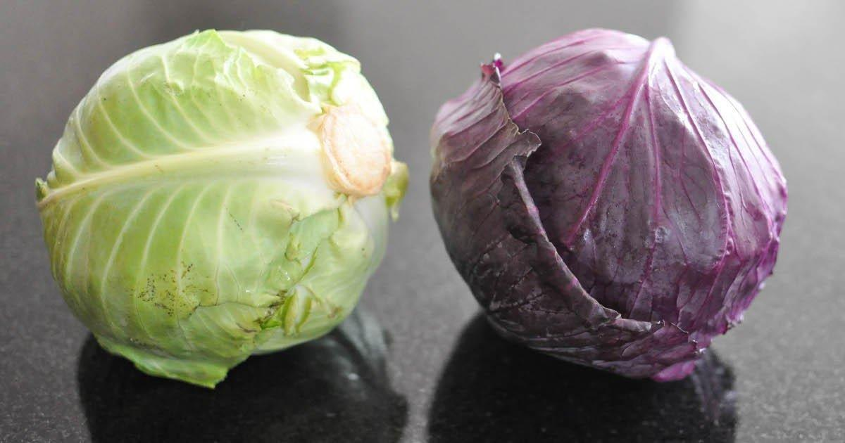Is White Cabbage Good For Diabetics