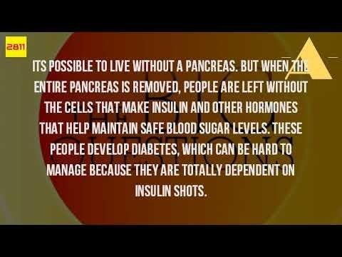 What Would Happen If You Did Not Have A Pancreas?