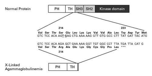 Type 1 Diabetes Heredity