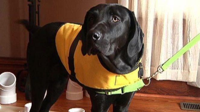 Couple Trains Their Own Diabetes-sniffing Dog
