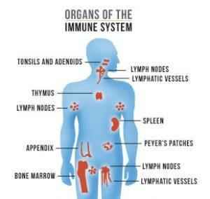 How Does Diabetes Affect The Immune System?