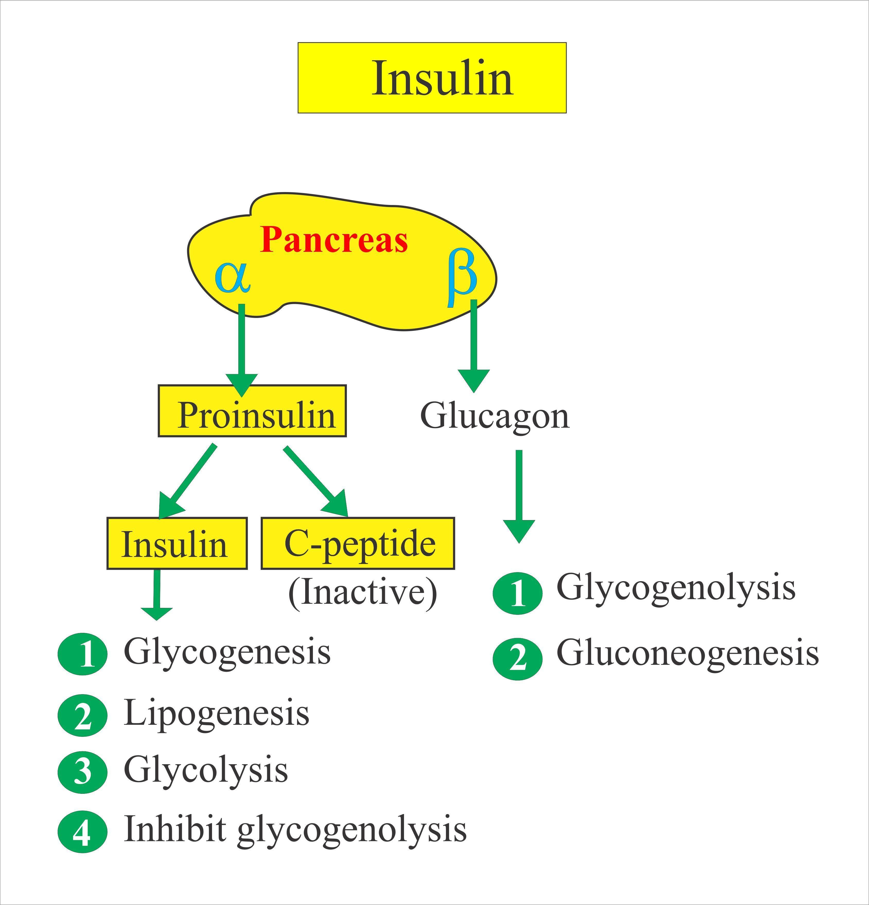 Insulin Assay Test