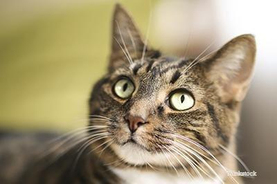 How Would I Know If My Cat Has Diabetes?