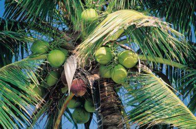 Is Coconut Oil Bad For Diabetics?