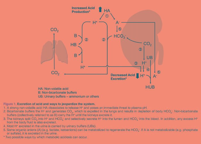 Drug-induced Metabolic Acidosis A Link To The Article And Some Excerpts