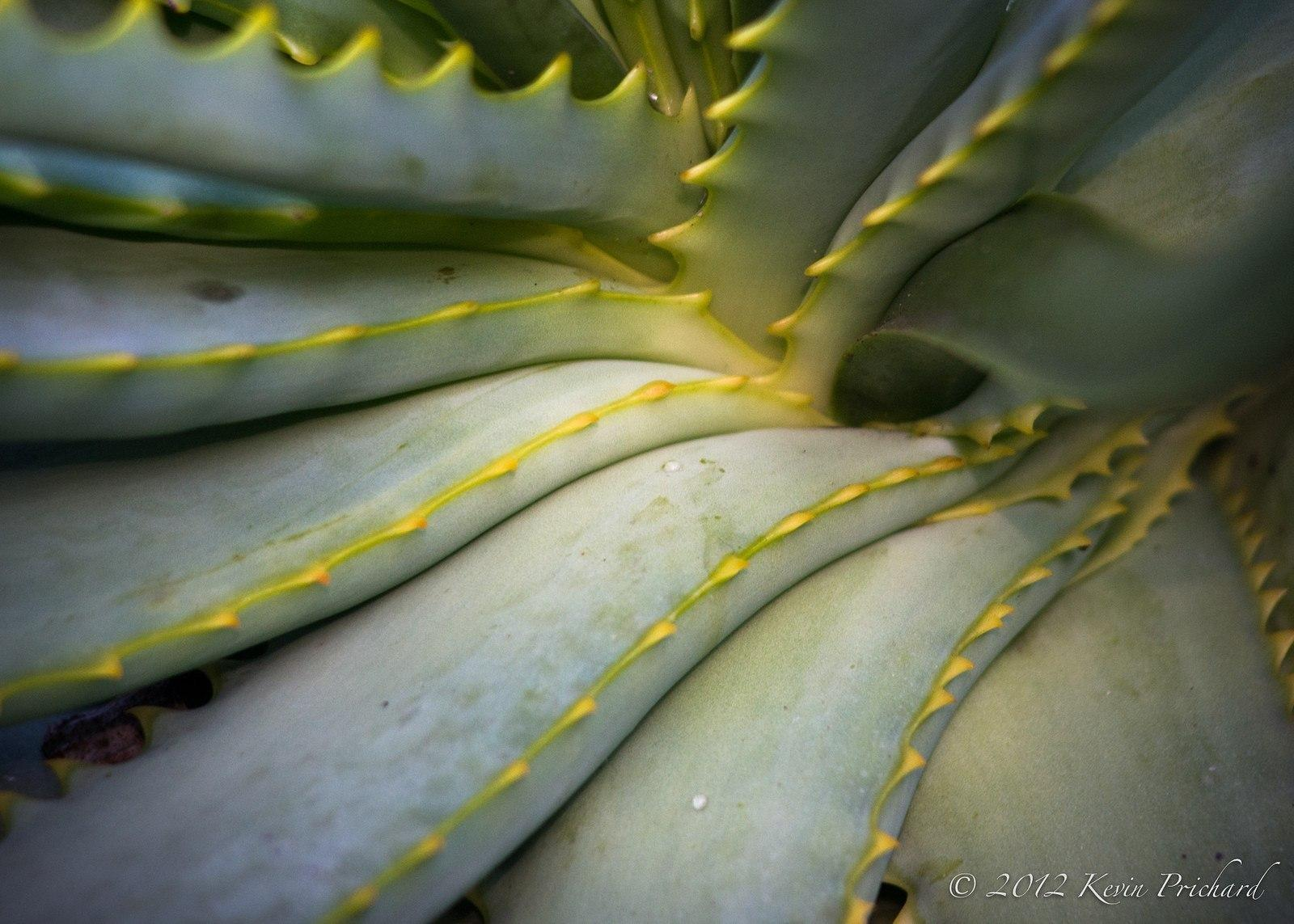 How To Use Aloe Vera For Diabetes | Lower Blood Sugar | Increase Insulin | Mtspace
