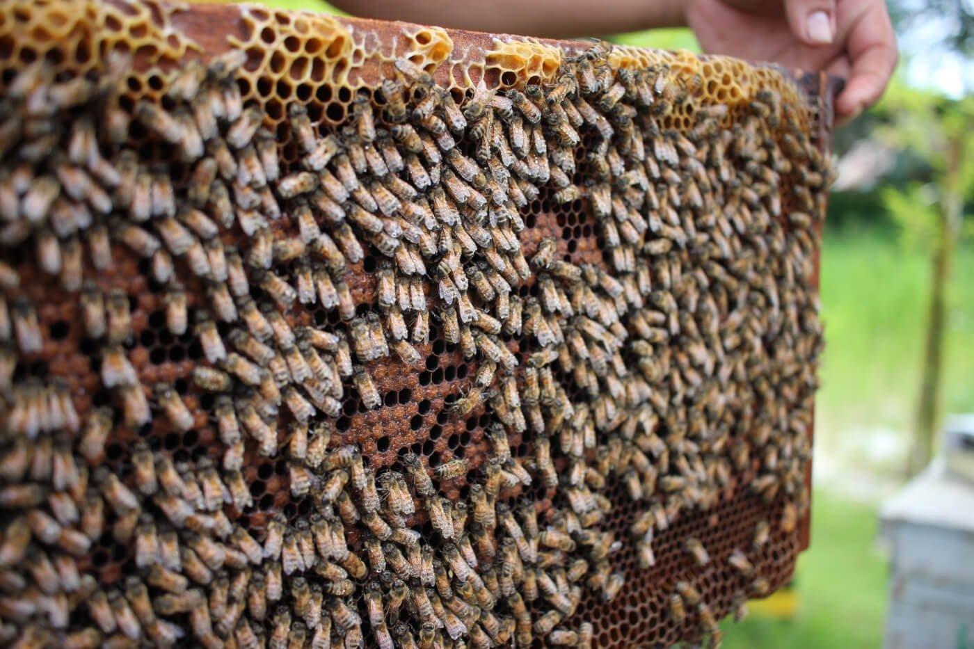8 Honey Alternatives That Don't Harm Bees   Peta2