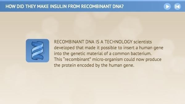 How Did They Make Insulin From Recombinant Dna?
