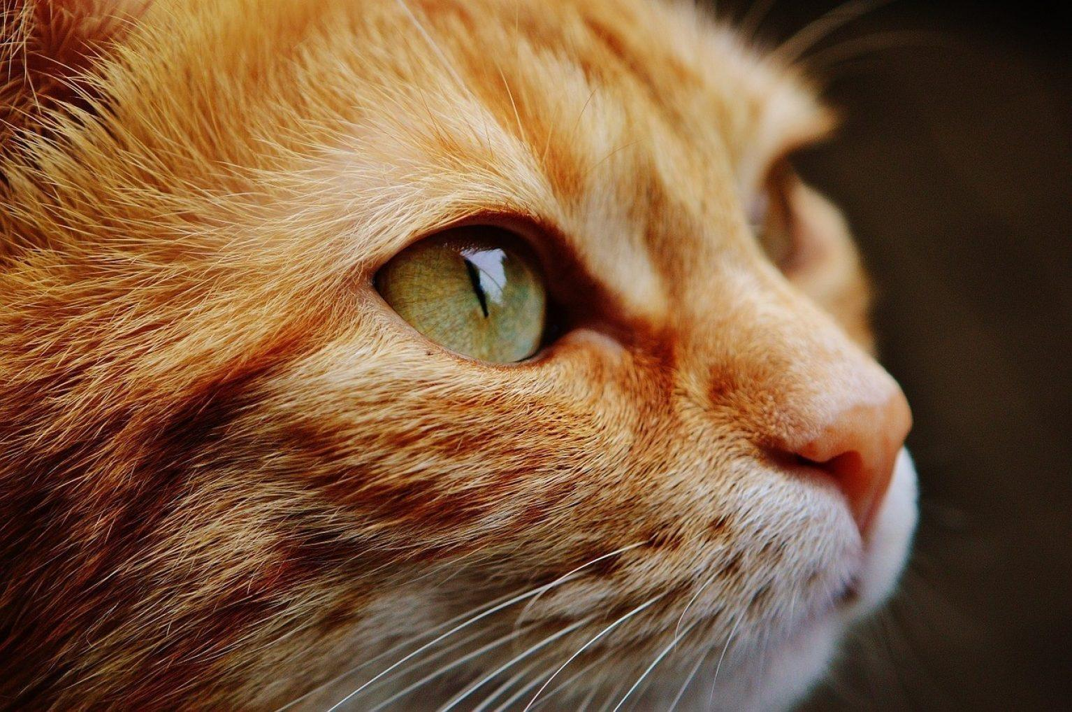 What Causes Diabetes In Older Cats?