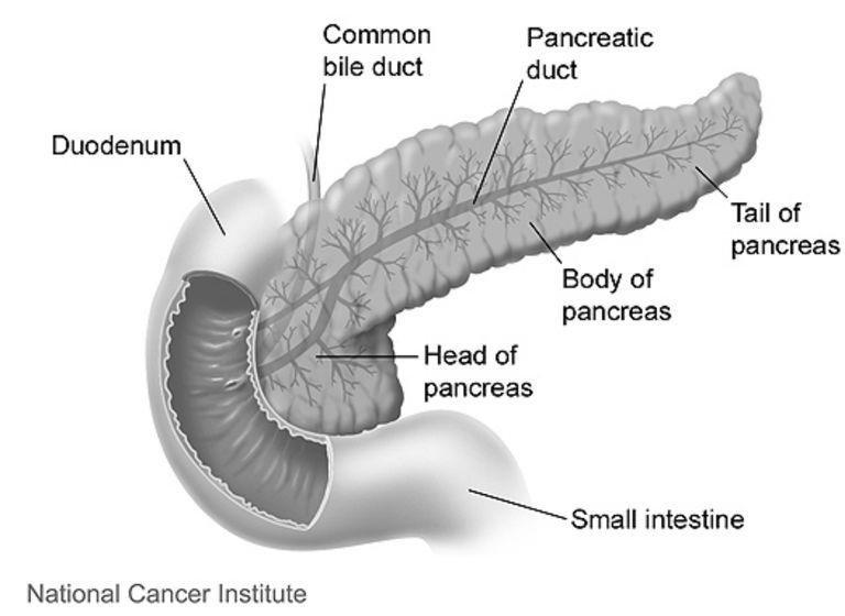 Understanding Your Pancreas