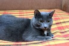Cats With Diabetes Life Expectancy