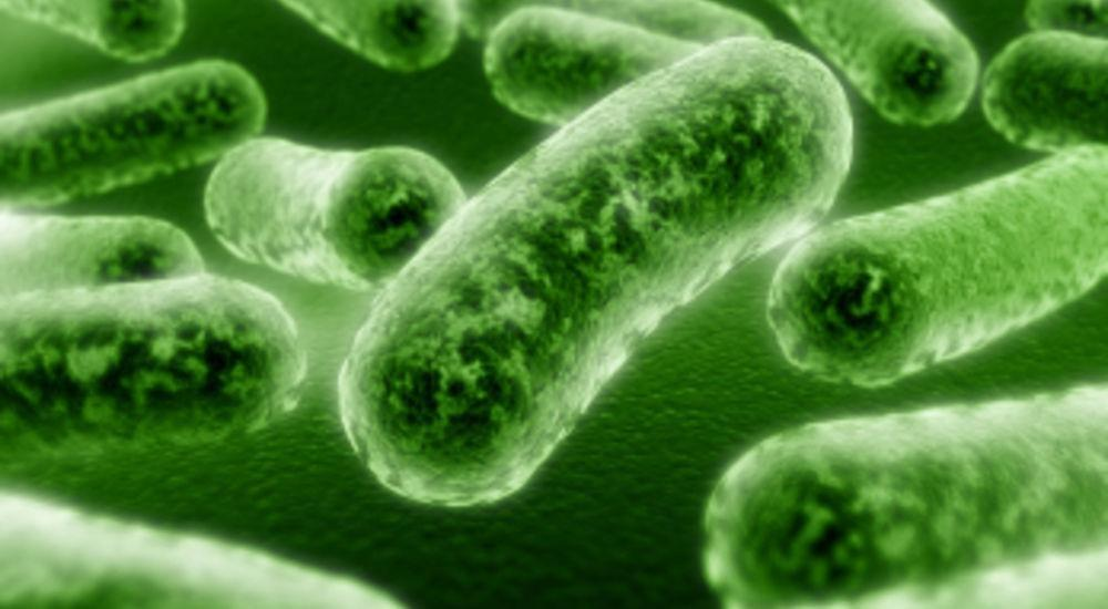 Could Bacteria Cause Overactive Bladder Symptoms?