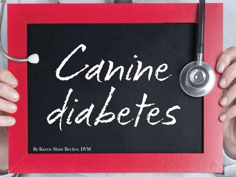 Dog Diabetes Treatment Options