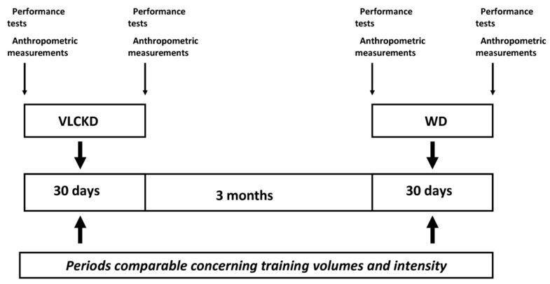 Ketogenic Diet Does Not Affect Strength Performance In Elite Artistic Gymnasts