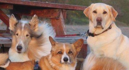 Diabetes In Dogs: All You Need To Know   Walkin' Pets