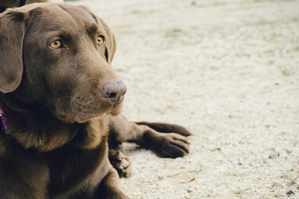 6 Signs Your Pet May Have Diabetes