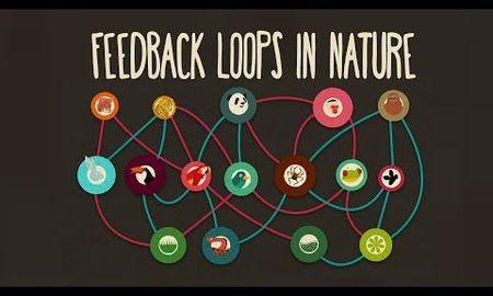 Is Diabetes Positive Or Negative Feedback Loop?