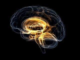 The Fat Burning Brain: What Are The Cognitive Effects Of Ketosis?