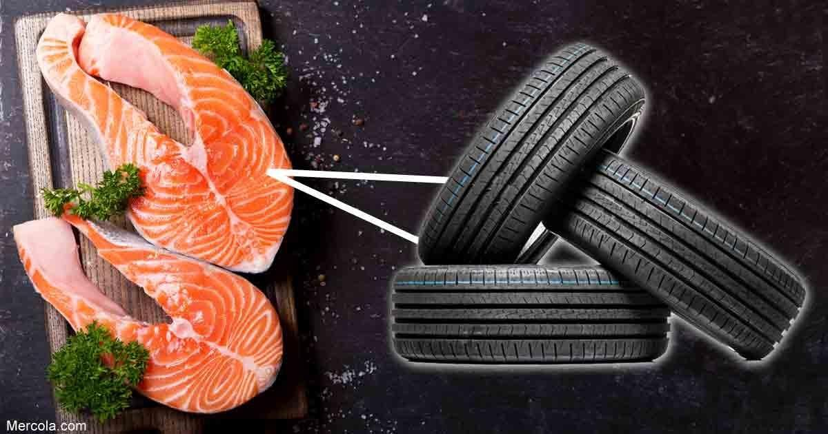 Farmed Salmon Contaminated With Synthetic Tire Chemical