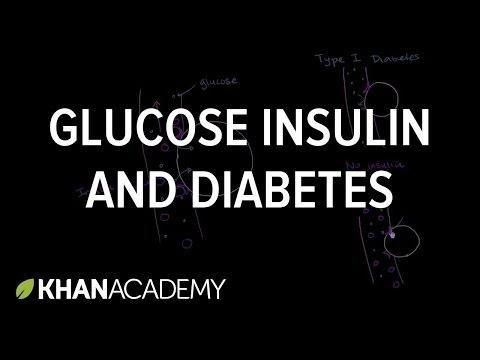 Relationship Between Insulin And Glucose
