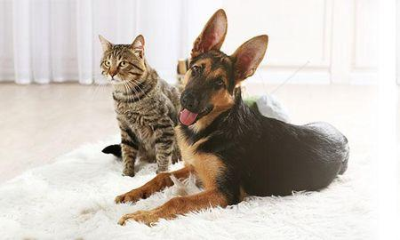 Signs & Treatments for Hypoglycemia in Diabetic Pets