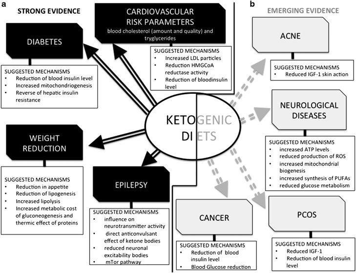 Ketogenic Diet: 25 Proven Benefits And How To Know If It's Right For You