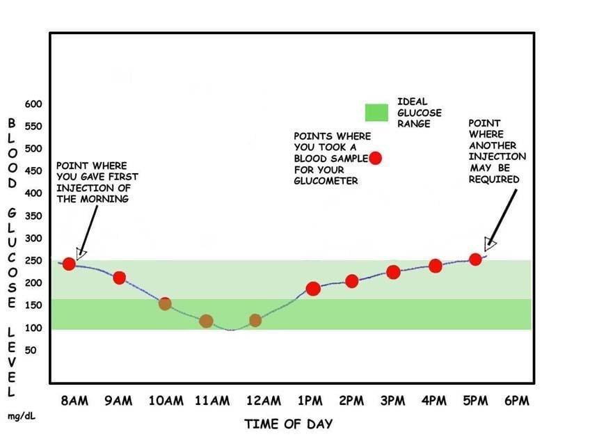 Interpreting The Glucose Curves
