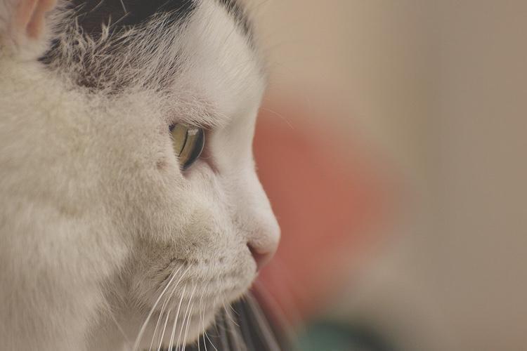 Diabetes In Cats: Symptoms & Treatment