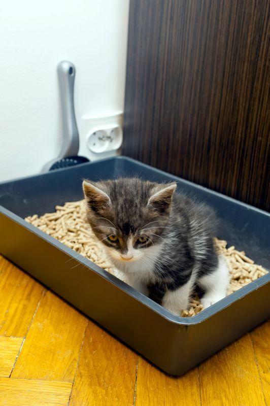 Common Feline Health Concerns