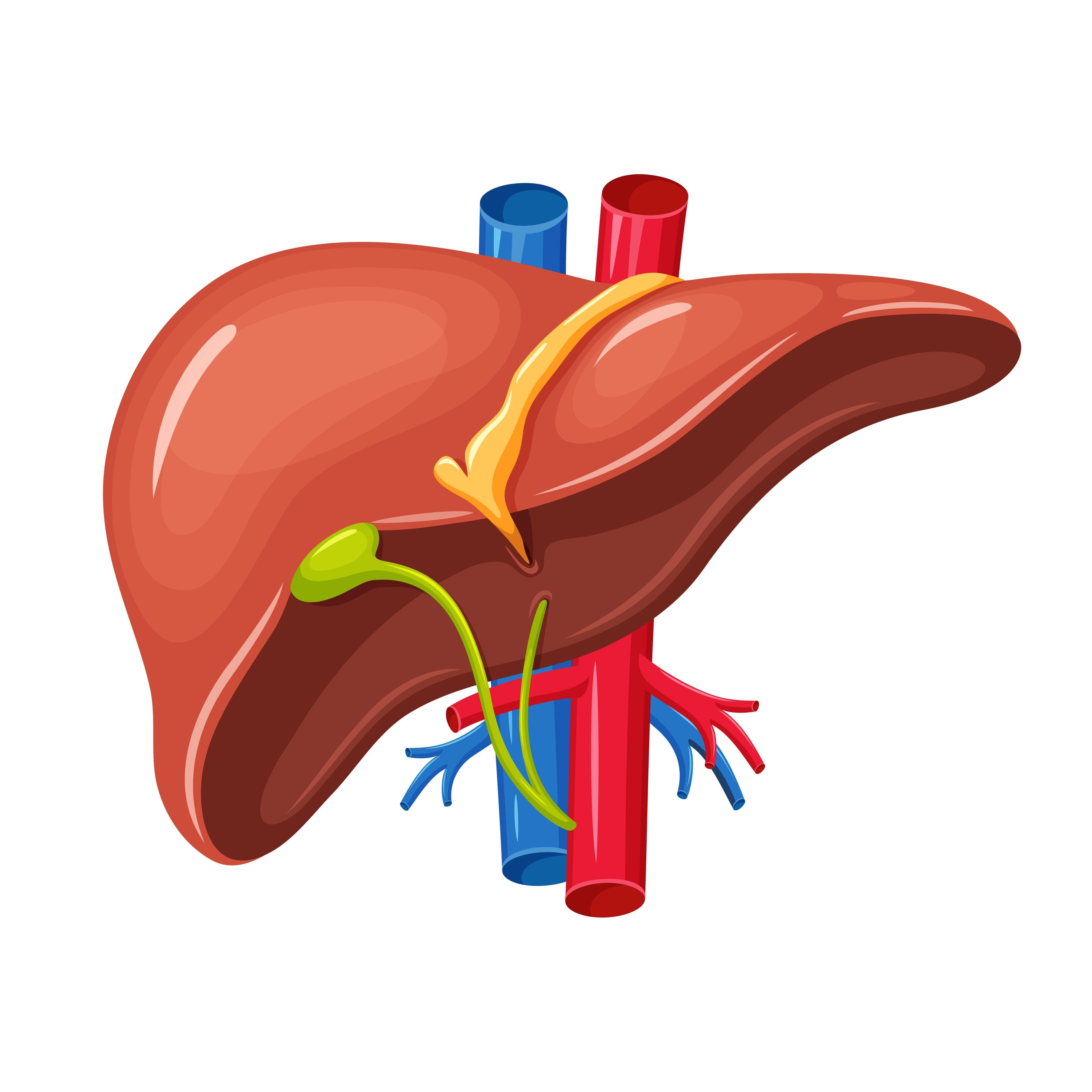 Diabetic Drugs Safe In Liver Diseases