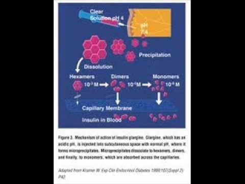 Insulin Glargine Mechanism Of Action