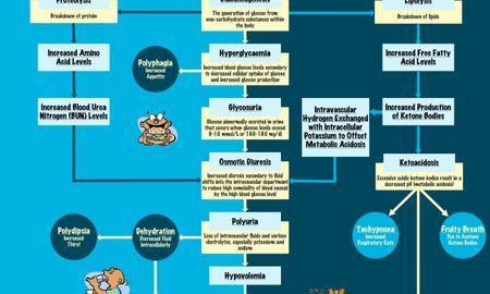 Diabetic Ketoacidosis Pathophysiology Diagram