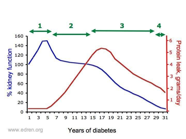 Why Does Diabetes Cause Chronic Kidney Disease?
