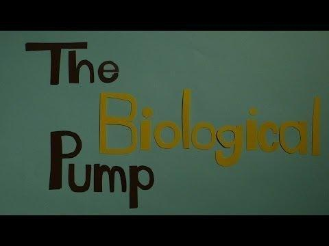 What Is A Pump In Biology?