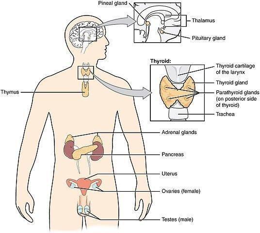 Diabetes Endocrine Disorder