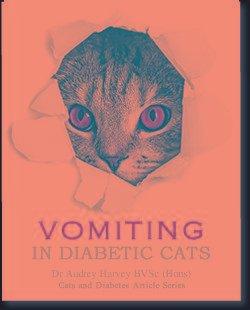 Vomiting In Diabetic Cats