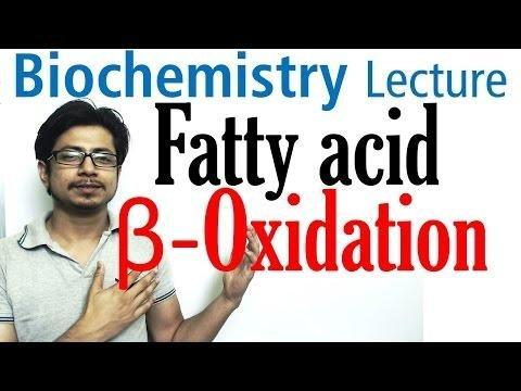 Fatty Acid Oxidation And Synthesis