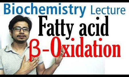The Common Pathway For The Oxidation Of Glucose And Fatty Acid Is