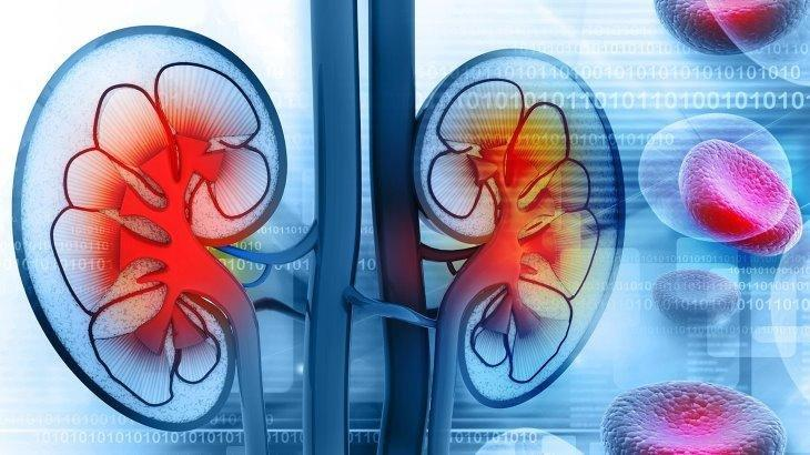 What Does Diabetes Do To The Kidney?